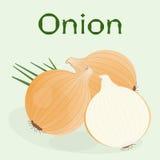 Una cebolla para la ensalada y media cebolla del corte con las hojas verdes Imagen de archivo libre de regalías