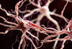 Una cellula nervosa umana sana illustrazione di stock
