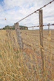 Una cerca del alambre de púas y viejos posts grises de la cerca alrededor de un prado rural Imagenes de archivo