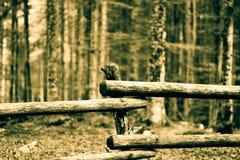 Una cerca divide el mundo del bosque imágenes de archivo libres de regalías
