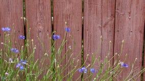 Una cerca vieja con la pintura y las flores de la peladura en una pequeña ciudad en los Estados Unidos de América anuncia la lleg metrajes