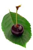 Una cereza en una hoja Fotografía de archivo