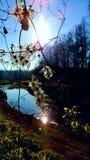 Una certa pianta alla luce solare fotografia stock libera da diritti