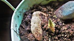 una certa pianta sconosciuta immagine stock