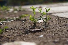 Una certa pianta verde immagini stock