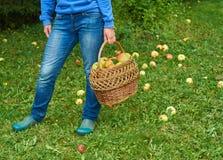 Una cesta de manzanas en mano femenina fotografía de archivo libre de regalías