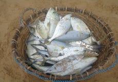 Una cesta de pescados recientemente de plata Fotos de archivo