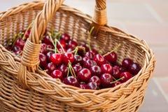 Una cesta de rojo brillante escogió por completo recientemente cerezas dulces tempranas imagen de archivo