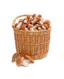 Una cesta de setas salvajes Foto de archivo libre de regalías