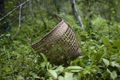 Una cesta en la selva Fotografía de archivo libre de regalías