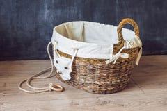 Una cesta para los juguetes hechos de los periódicos viejos Basura cero Imagen de archivo