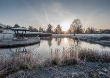 Una charca congelada con el sol naciente Imágenes de archivo libres de regalías