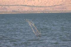 Una chiave sta sviluppandosi dal lago Immagine Stock Libera da Diritti