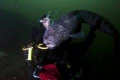 Una chica joven con una anguila del lobo Imagen de archivo