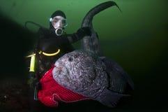 Una chica joven con una anguila del lobo Imagen de archivo libre de regalías