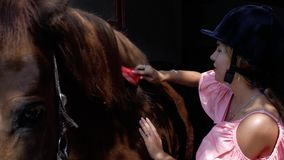 Una chica joven en un casco que monta está peinando una melena del caballo con un cepillo especial Cuidado para los animales 4K v almacen de metraje de vídeo