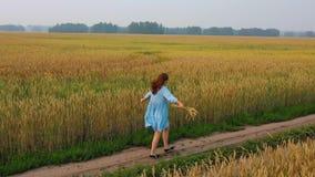 Una chica joven en un vestido camina a lo largo de un campo de trigo Madrugada, niebla ligera metrajes