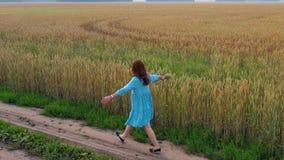 Una chica joven en un vestido camina a lo largo de un campo de trigo Madrugada, niebla ligera almacen de metraje de vídeo
