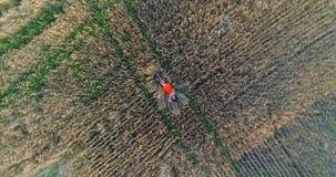 Una chica joven en un vestido miente en un campo de trigo Tiroteo de un abejón Ocio y entretenimiento en el aire abierto almacen de metraje de vídeo