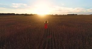 Una chica joven en un vestido que corre a través de un campo del trigo en la puesta del sol Tiroteo de un abejón Deportes al aire almacen de video