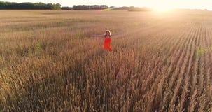 Una chica joven en un vestido que corre a través del campo del trigo Tiroteo de un abejón Deportes al aire libre metrajes