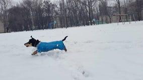 Una chica joven juega con un perro en la nieve en el invierno almacen de video