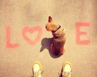 Una chihuahua linda que se sienta en el amor de la palabra en una acera Imagenes de archivo