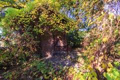 Una choza overgrown Foto de archivo
