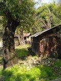 Una choza vieja debajo de un árbol imágenes de archivo libres de regalías