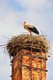 Una cicogna nel suo nido Fotografia Stock