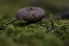 Una cima della ghianda nella foresta di Irun Spagna Immagine Stock