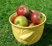 Una ciotola di mele rosse mature in un giardino soleggiato Immagine Stock Libera da Diritti
