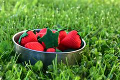 Una ciotola di sewen le fragole nell'erba Immagine Stock Libera da Diritti