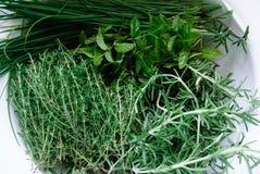 Una colapasta in pieno delle erbe verdi fresche immagine stock libera da diritti