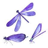 Una colección de acuarelas que vuelan libélulas Fotografía de archivo libre de regalías