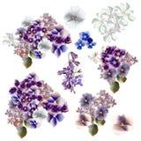 Una colección de flores realistas del vector en los colores del estilo de la acuarela, púrpuras y azules Fotos de archivo libres de regalías