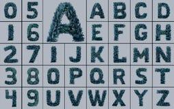 Una colección de letras del árbol Fotos de archivo libres de regalías