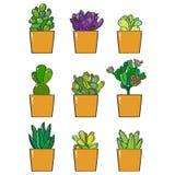 Una colección de nueve plantas suculentas ilustración del vector