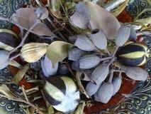Una colección de plantas y de semillas australianas secadas Fotografía de archivo