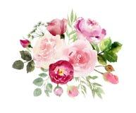 Una colección de rosas pintadas a mano de las flores de la acuarela ilustración del vector