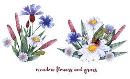 Una collezione di erbe e di fiori Camomilla, plantano, fiordalisi watercolor illustrazione vettoriale