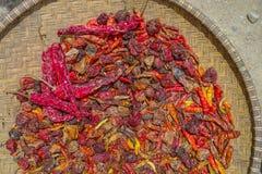 Una collezione di peperoni secchi Fotografia Stock
