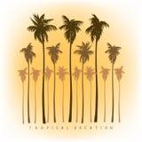 Una collezione di siluette delle palme in uno stile realistico Fotografia Stock Libera da Diritti