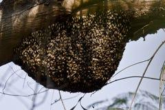 Una colmena de la abeja en un bosque Imágenes de archivo libres de regalías