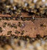 Una colmena, una visión desde el interior La abeja-choza Abeja de la miel Entrada a la colmena Fotos de archivo libres de regalías
