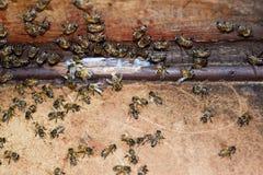 Una colmena, una visión desde el interior La abeja-choza Abeja de la miel Entrada a la colmena Foto de archivo