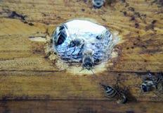 Una colmena, una visión desde el interior La abeja-choza Abeja de la miel Entrada a la colmena Imagen de archivo