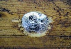 Una colmena, una visión desde el interior La abeja-choza Abeja de la miel Entrada a la colmena Fotografía de archivo