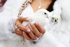 Una colomba in sue mani Fotografia Stock Libera da Diritti