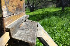 Una colonia de abejas lleva el néctar a la colmena imágenes de archivo libres de regalías